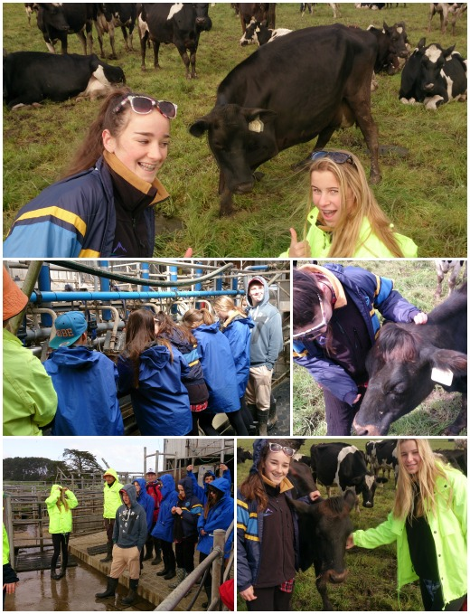 1A Visits Demo Dairy